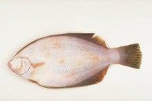日本フィッシング協会認定、釣り情報ブログ