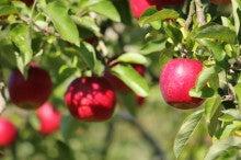Stella Maris アロマの時間-りんご