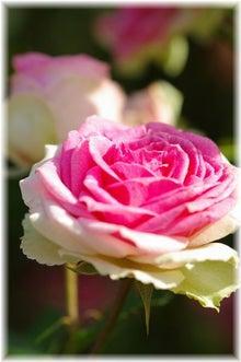 毎日はっぴぃ気分☆-ピンク&白