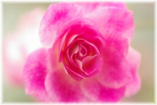 毎日はっぴぃ気分☆-ピンク