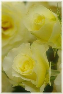 毎日はっぴぃ気分☆-白い花束