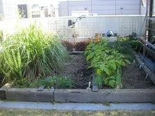 ムックの屋上菜園ベジブログ