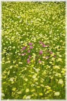 毎日はっぴぃ気分☆-黄色の中のピンク