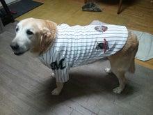 大型犬の服・グッツでハッピーライフサポート
