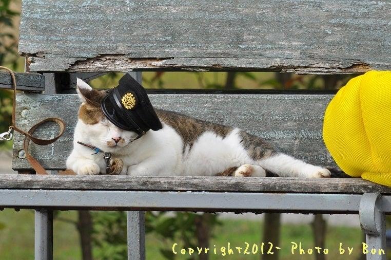 駅長猫コトラの独り言~旧 片上鉄道 吉ヶ原駅勤務~-帽子斜めになったわ