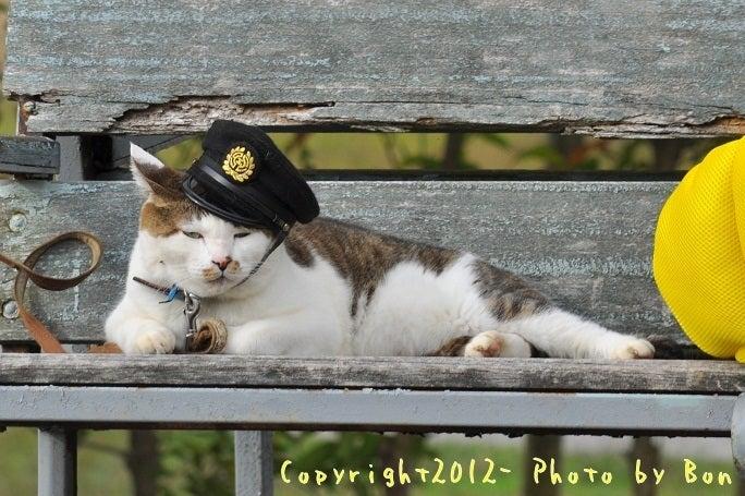 駅長猫コトラの独り言~旧 片上鉄道 吉ヶ原駅勤務~-嘱託のコトラやで