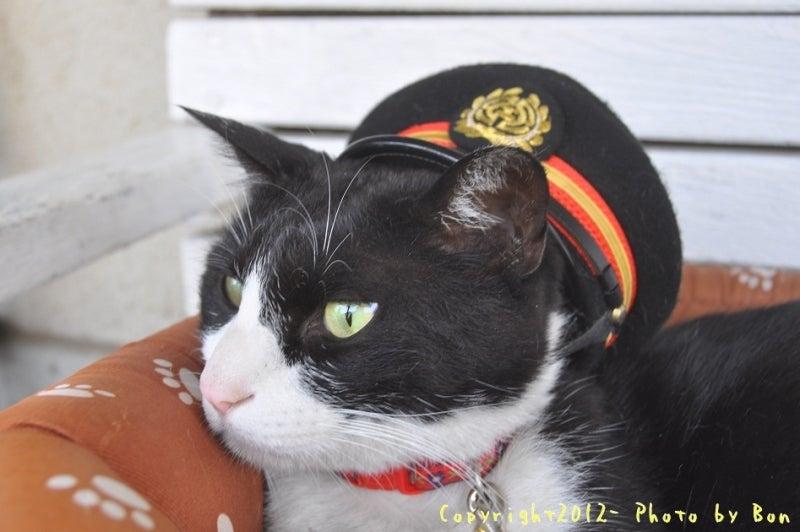 駅長猫コトラの独り言~旧 片上鉄道 吉ヶ原駅勤務~-新駅長猫ホトフも元気やし