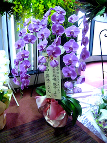 ハレの日きもの。恵比寿 きものBeBe のブログ
