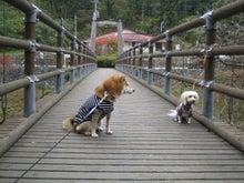 ゴロウマン-つり橋