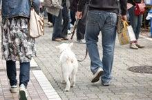 $吉祥寺・三鷹で婚活、結婚のお相手に出会う! 結婚相談所スイートメイプル-犬とお散歩