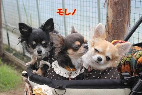 ネバーランド犬舎のブログ