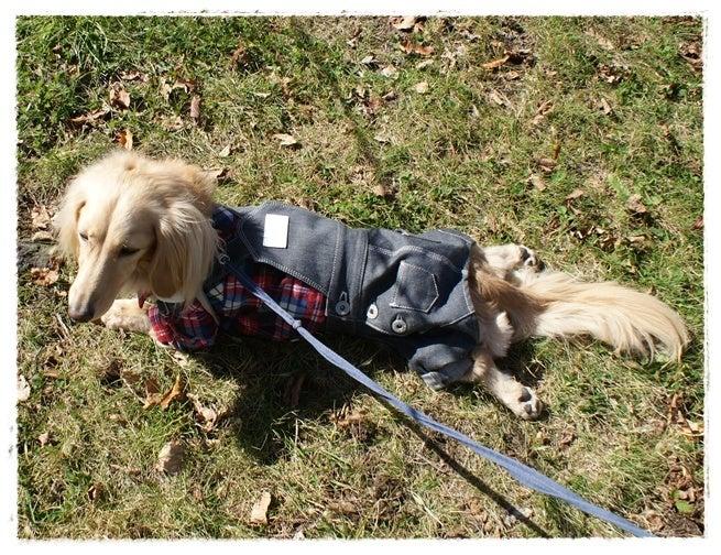 旅犬Lani&Leaのほほん風船記-La Festa Autunno