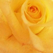 $namy's blog-白バラ