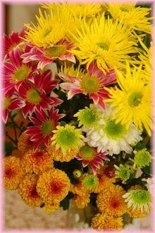 毎日はっぴぃ気分☆-菊の花