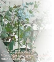 shokawanのガーデニング&気まぐれブログ