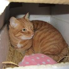 $ねこの☆ジムショ, The office of a cat, 貓的事務所,고양이의 사무소 ,Контора кота