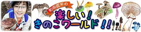 和田匠平のきのこ日記-1