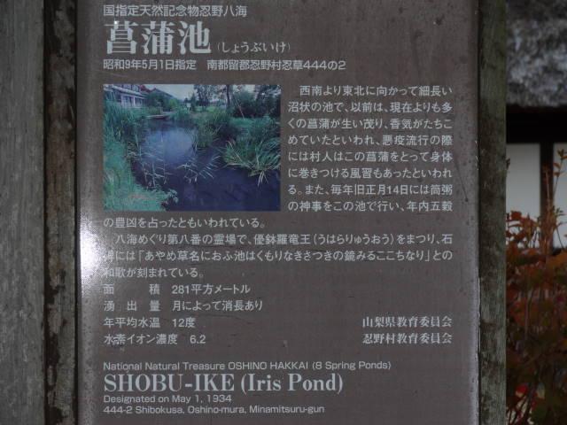 ルークのブログ-菖蒲池 1