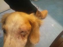 愛犬チップの鼻腔移行上皮癌~闘病日記~