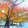 桜の葉の話 と 宇宙…