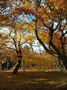 BRONX 光の森のブログ