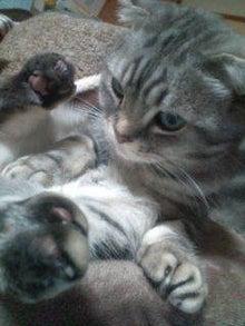 ウサ猫とポチャ猫-20121121234711.jpg