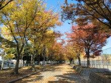 赤と黒-勧修寺公園