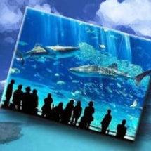 美ら海水族館に行く夢…