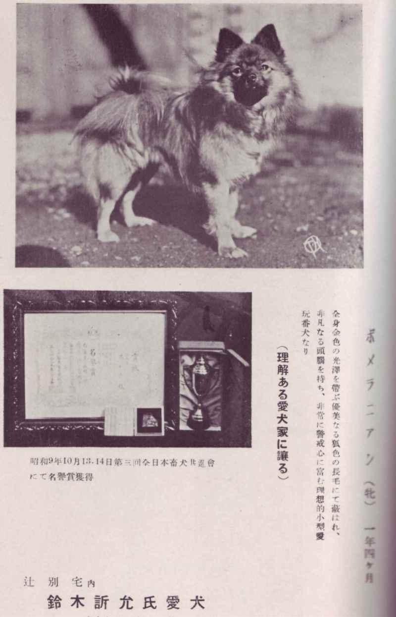 帝國ノ犬達-ポメラニアン