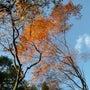 夕陽に照らされた紅葉…