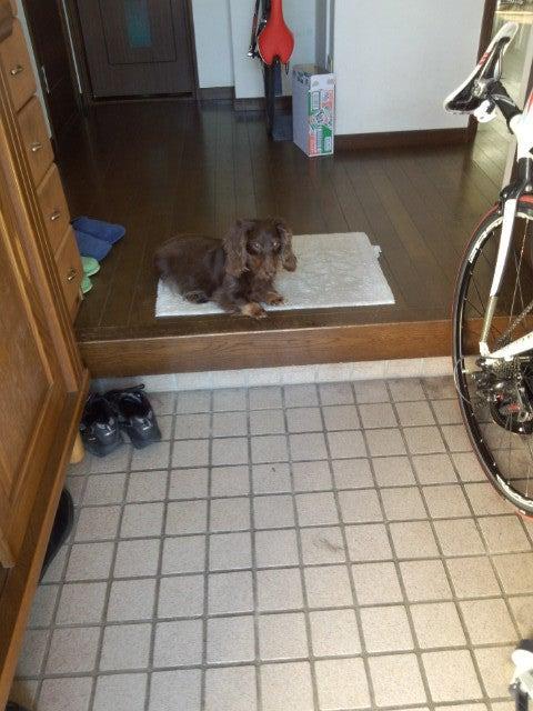 犬太郎が来た!-IMG_20121125_112802.jpg