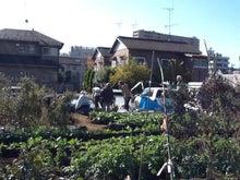 和光市長 松本たけひろの「持続可能な改革」日記-畑仕事