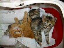HWJ犬猫を助けたい仲間のブログ