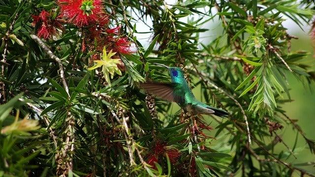 熱帯雨林を歩く 熱帯雨林の豆知識-30.空中で静止する世界一 ...