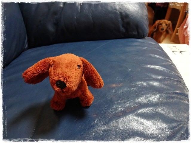 旅犬Lani&Leaのほほん風船記-ピレネー