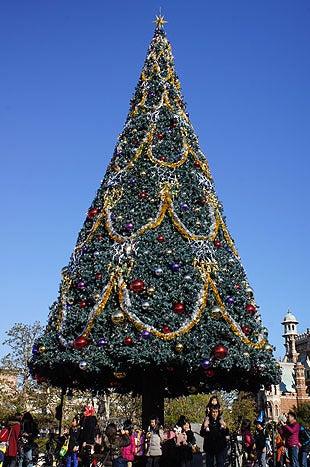 高さ15メートル程の巨大なクリスマスツリー