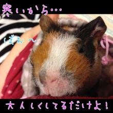 ☆さむさむ家☆-image.png