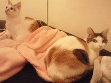PFL★MIKIのブログ-2012112917170000.jpg