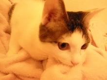 PFL★MIKIのブログ-2012112917050000.jpg