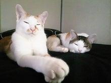 PFL★MIKIのブログ-2012112714520000.jpg