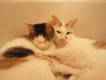 PFL★MIKIのブログ-2012112621580000.jpg