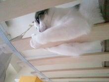 PFL★MIKIのブログ-2012112613040000.jpg