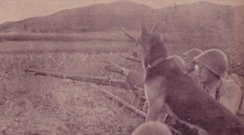 帝國ノ犬達-軍犬