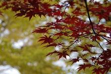 キモノでジャックin栃木のブログ