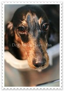 Dog Salon Fairy Ann