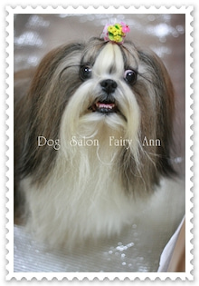Dog Salon Fairy Ann