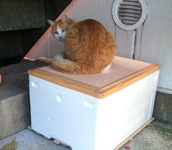 日々是ねこパト (sakki が繋ぐ地域猫活動)