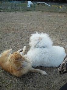 アニマルエステ美犬(ビーワン) うちのお犬・お猫様が一番!!-1354864155222.jpg
