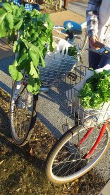 まちなか菜園 ひだまりファーム多摩平で野菜生活!