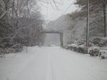 ここのたこ パート3  SUKIYAKISAKURA    Isigure Japan-CA3K1129.jpg